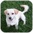 Photo 2 - Corgi Mix Puppy for adoption in Poway, California - Sam