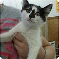 Adopt A Pet :: Manard - Troy, OH
