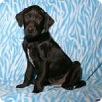 Adopt A Pet :: Fiyero - Newcastle, OK