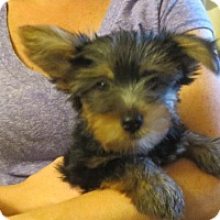 Adopt A Pet :: Lyle - Greenville, RI