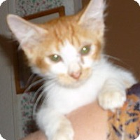 Adopt A Pet :: OJ - Dallas, TX