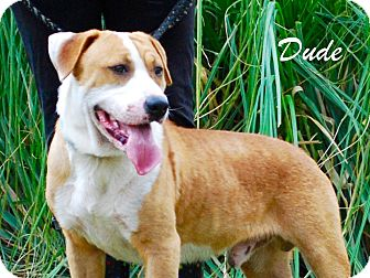 Hound (Unknown Type) Mix Dog for adoption in Daleville, Alabama - Dude