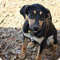 Adopt A Pet :: Todd - Muldrow, OK