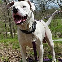 Adopt A Pet :: Bruno - Jackson, MO