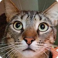 Adopt A Pet :: Merlin - Sarasota, FL