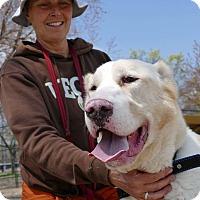 Adopt A Pet :: IRENA - Toronto/GTA, ON