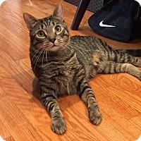 Adopt A Pet :: Pierre - Gaithersburg, MD