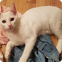 Adopt A Pet :: Powder - Duluth, GA