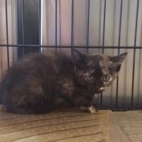 Adopt A Pet :: KARA - Clinton, NC