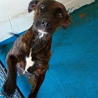 Adopt A Pet :: Taika - Waycross, GA