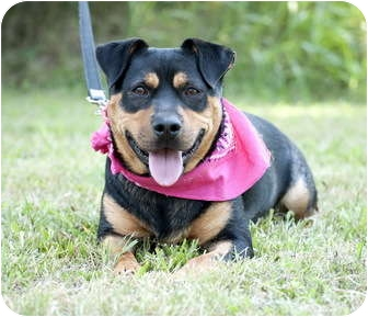 Rottweiler Mix Dog for adoption in Portsmouth, Rhode Island - Greta