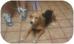Beagle Mix Dog for adoption in Paintsville, Kentucky - Daisy