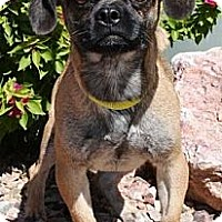 Adopt A Pet :: Ethel - Gilbert, AZ
