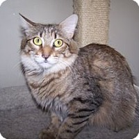 Adopt A Pet :: Jackie - Colorado Springs, CO