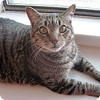 Adopt A Pet :: Bubba - The Colony, TX