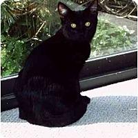 Adopt A Pet :: Pounce - Montgomery, IL