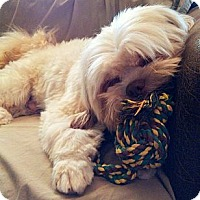 Adopt A Pet :: Redford ~ Sadie's Rescue - San Angelo, TX