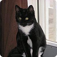 Adopt A Pet :: Shia - Monroe, GA