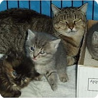 Adopt A Pet :: Missy#2 and 4 kittens - Westfield, MA