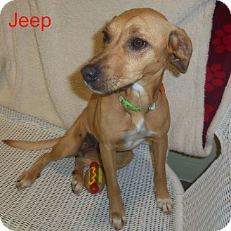 Hound (Unknown Type) Mix Dog for adoption in Slidell, Louisiana - Jeep