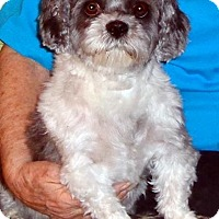 Adopt A Pet :: Snoop - Toronto, ON