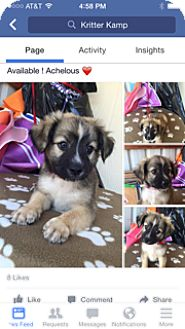 Cattle Dog Mix Puppy for adoption in Elk Grove, California - achelous