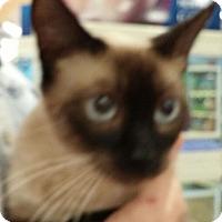 Adopt A Pet :: Freedom - Cocoa, FL