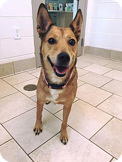 Shepherd (Unknown Type) Mix Dog for adoption in Prince George, Virginia - Debbie