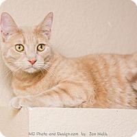 Adopt A Pet :: David II - Fountain Hills, AZ
