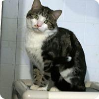 Adopt A Pet :: Snowball - Geneseo, IL