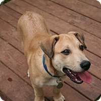 Adopt A Pet :: Niko - Hagerstown, MD