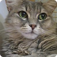 Adopt A Pet :: PRINCESS - Brea, CA