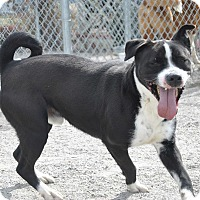 Adopt A Pet :: Radar - Windsor, VA