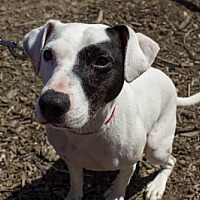 Adopt A Pet :: Wyatt - Seal Beach, CA
