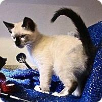 Adopt A Pet :: Rutherford - Davis, CA