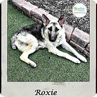 Adopt A Pet :: Roxie - Plainfield, IL