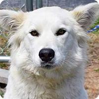 Adopt A Pet :: Diamond - Kingston, TN