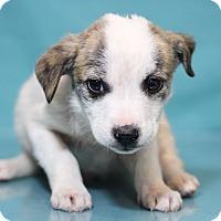 Adopt A Pet :: Reno - Waldorf, MD