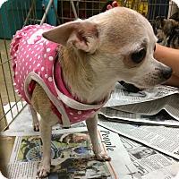 Adopt A Pet :: Lucy - Durham, NC