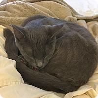 Adopt A Pet :: Skittles - Chattanooga, TN