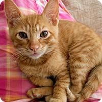 Adopt A Pet :: Rufus - San Carlos, CA