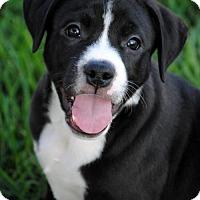 Adopt A Pet :: Sig - Fargo, ND