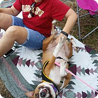 Adopt A Pet :: Phoebe - Pinellas Park, FL