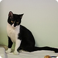 Adopt A Pet :: Dora - Murphysboro, IL