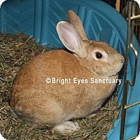 Adopt A Pet :: Dusty - Rockville, MD