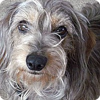 Adopt A Pet :: Rocco - Toronto, ON