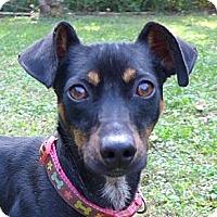 Adopt A Pet :: Ragz - Mocksville, NC