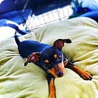 Adopt A Pet :: Nellie - Huntington Beach, CA