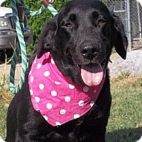 Adopt A Pet :: CINDERS/Summer Special Price - Glastonbury, CT
