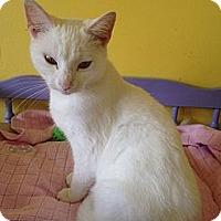 Adopt A Pet :: Opal - Mobile, AL